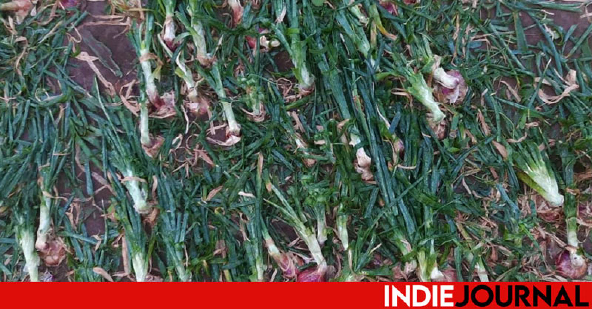 Marathwada Crop Loss